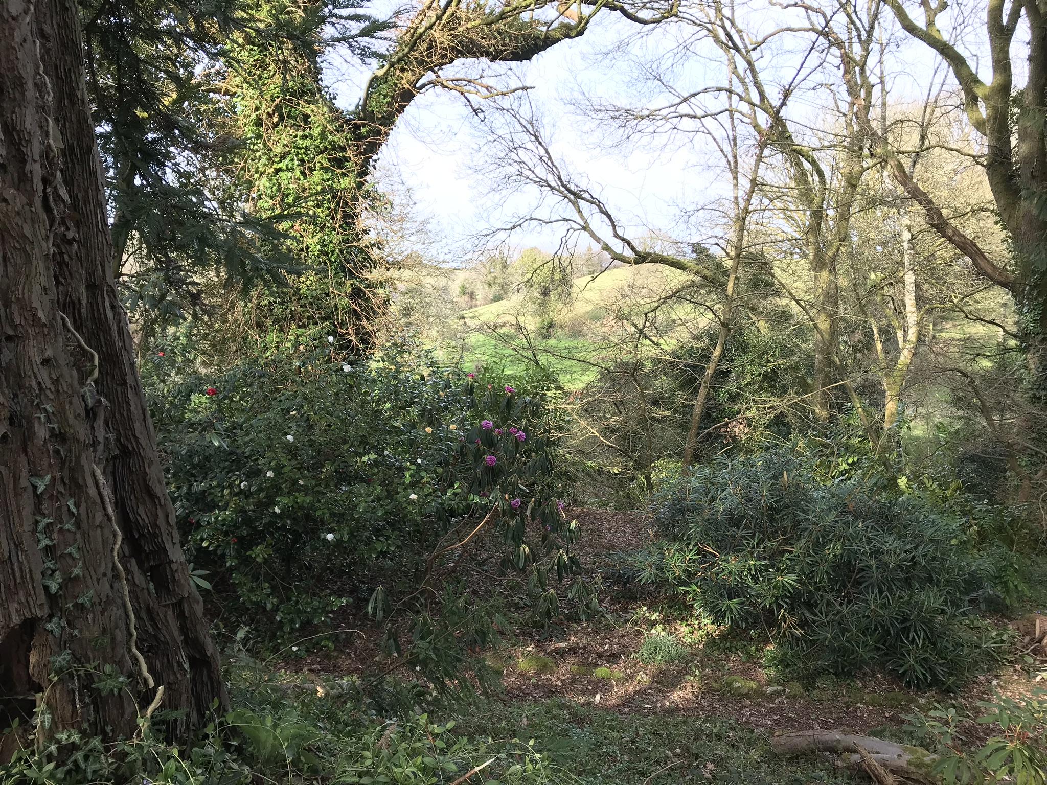 shrubbery& pete's field 5 Apr.jpg