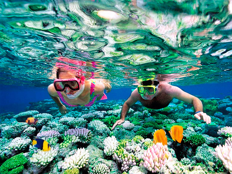 Marine-Life-you-can-find-when-snorkeling-in-Cancun.jpg