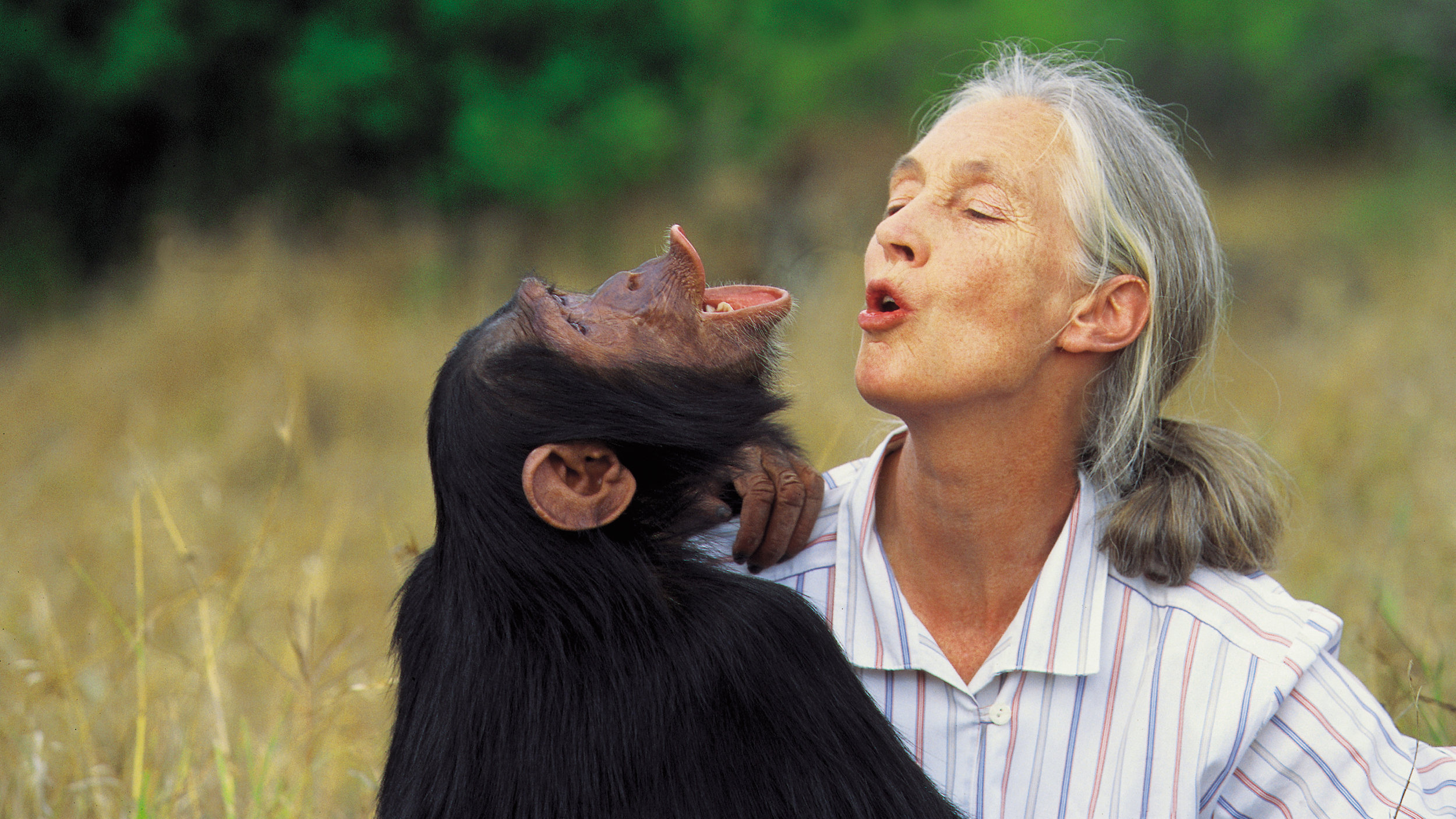 jane-goodall-old-landing-page-header.jpg