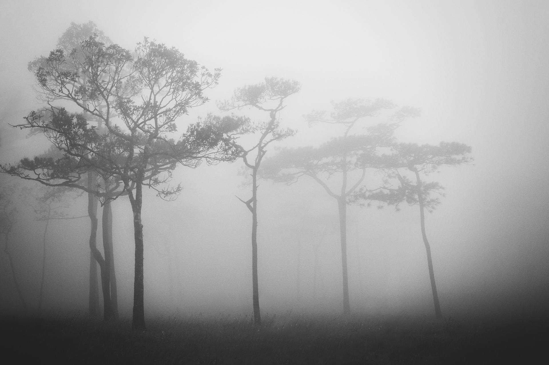 Photo: Palm Saithip