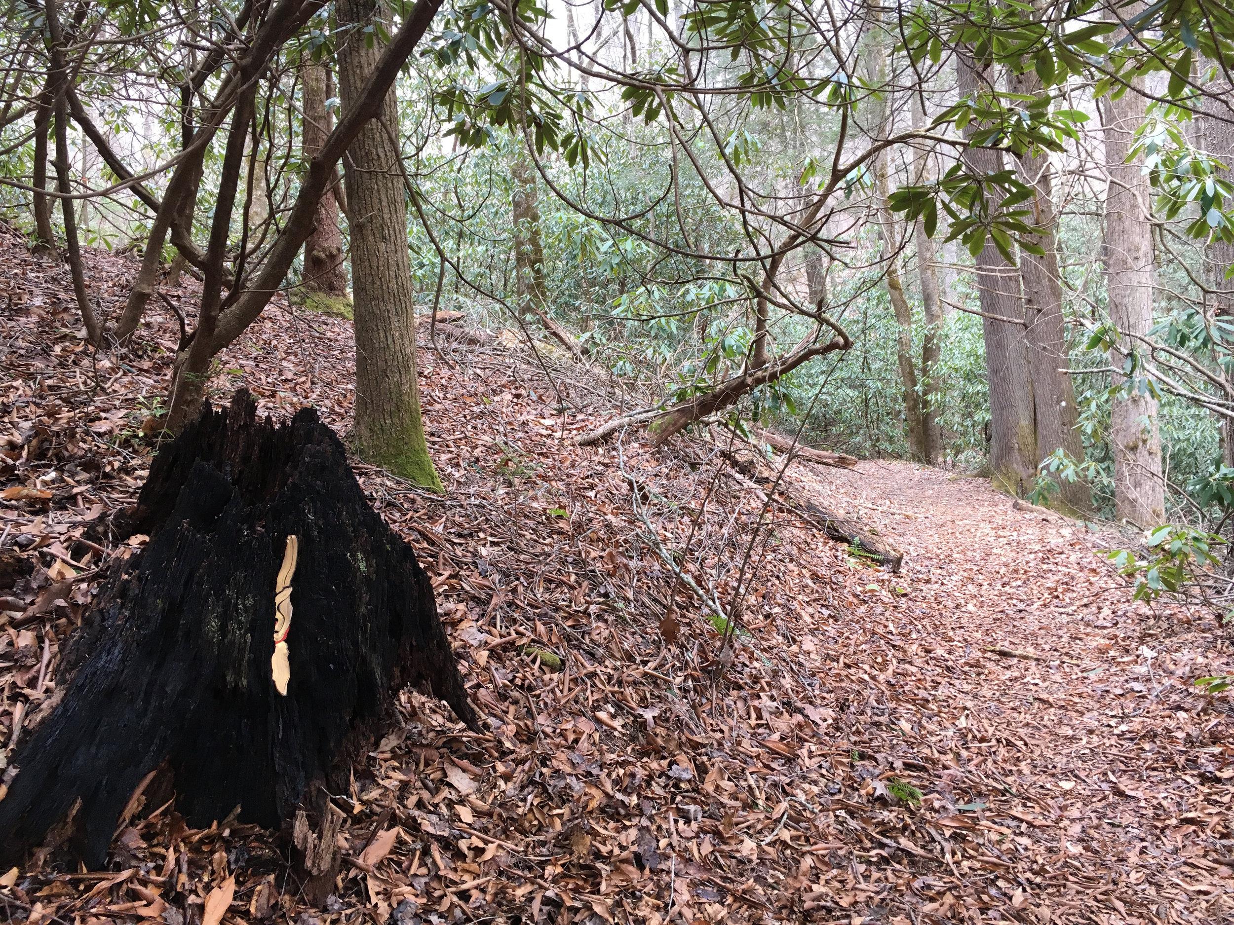 cove-forest-marker.jpg