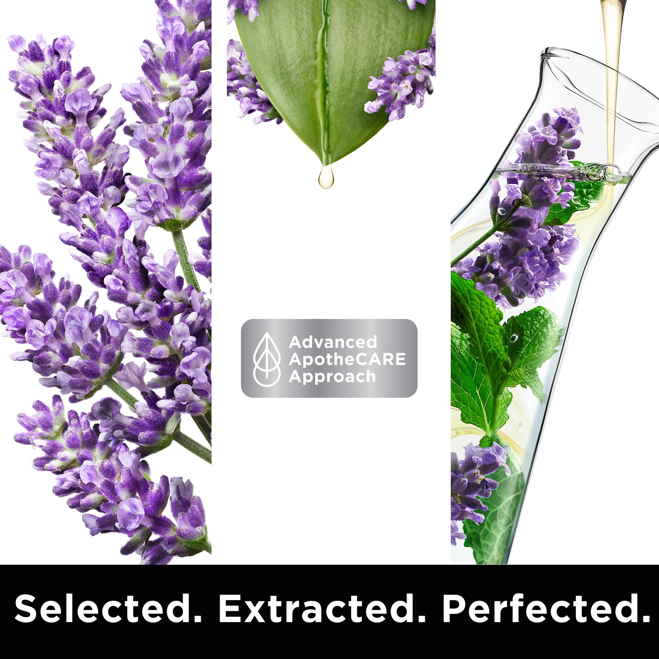APC SUPPLEMENTARY IMAGE Lavender.jpg