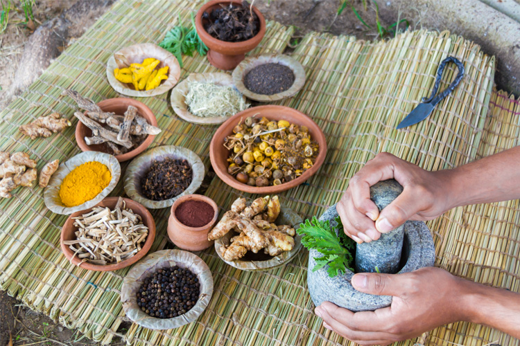 Panchakarma Enema Vasti oils and decoctions are made from several herbs mashed and extracted in water and oil.