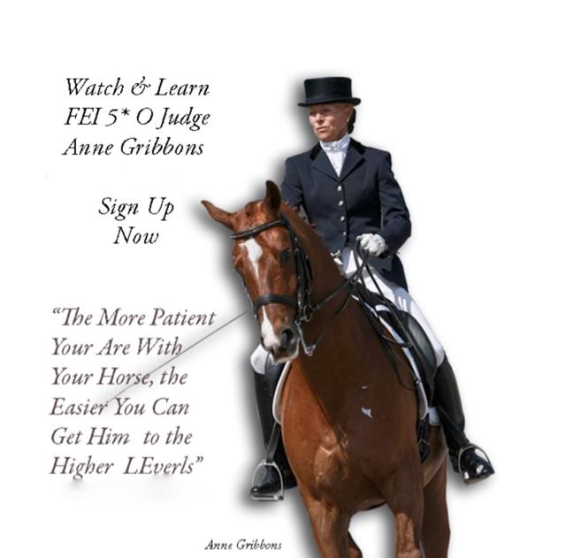 Anne Gribbons Clinic - Hillock Dressage Horses