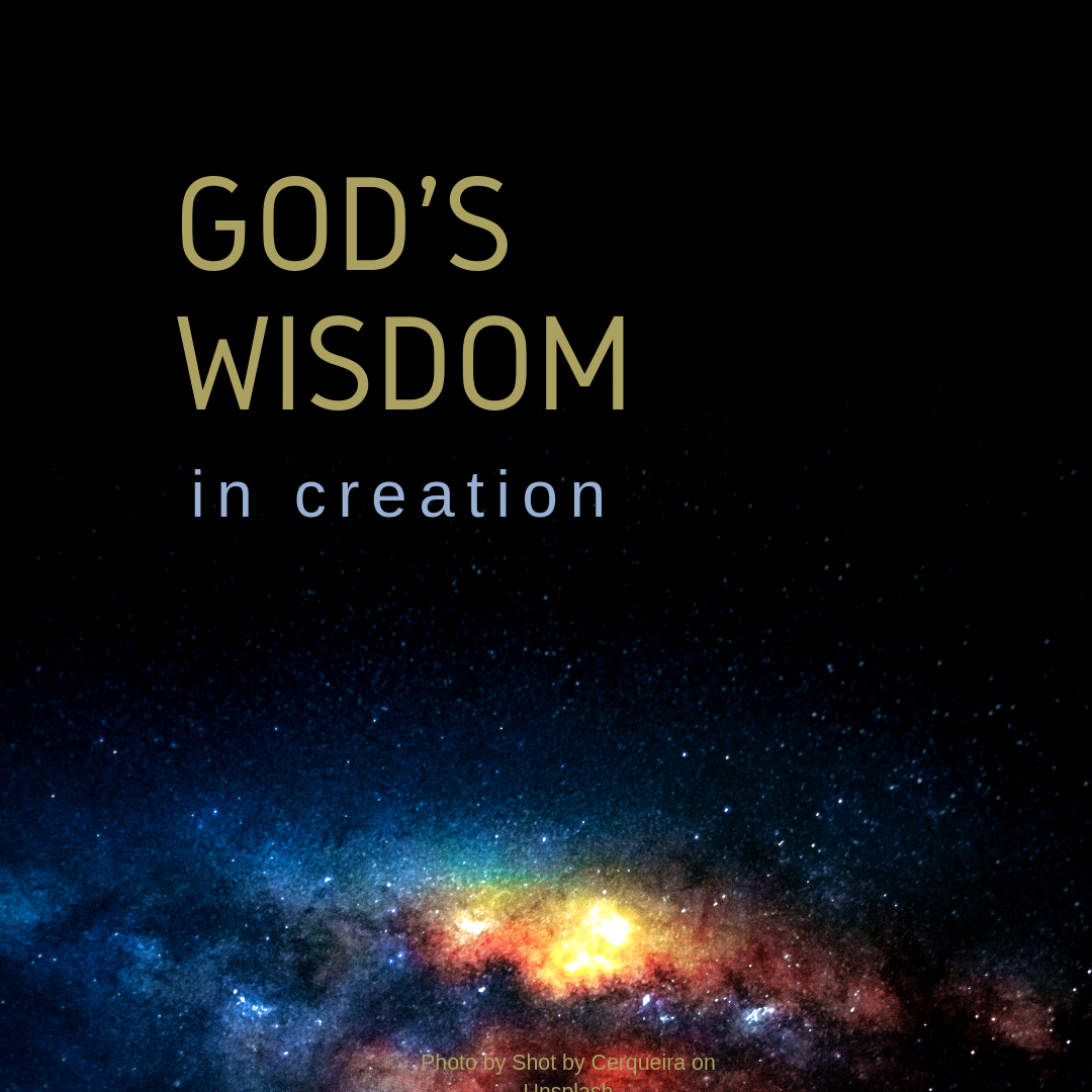 God's Wisdom in Creation.png