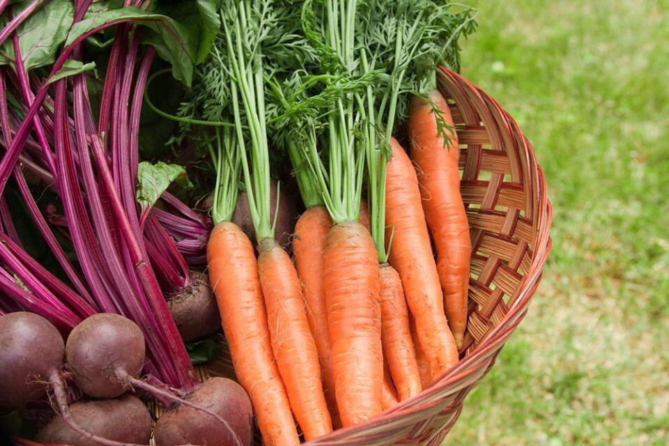 Beetroot & Carrots.jpg