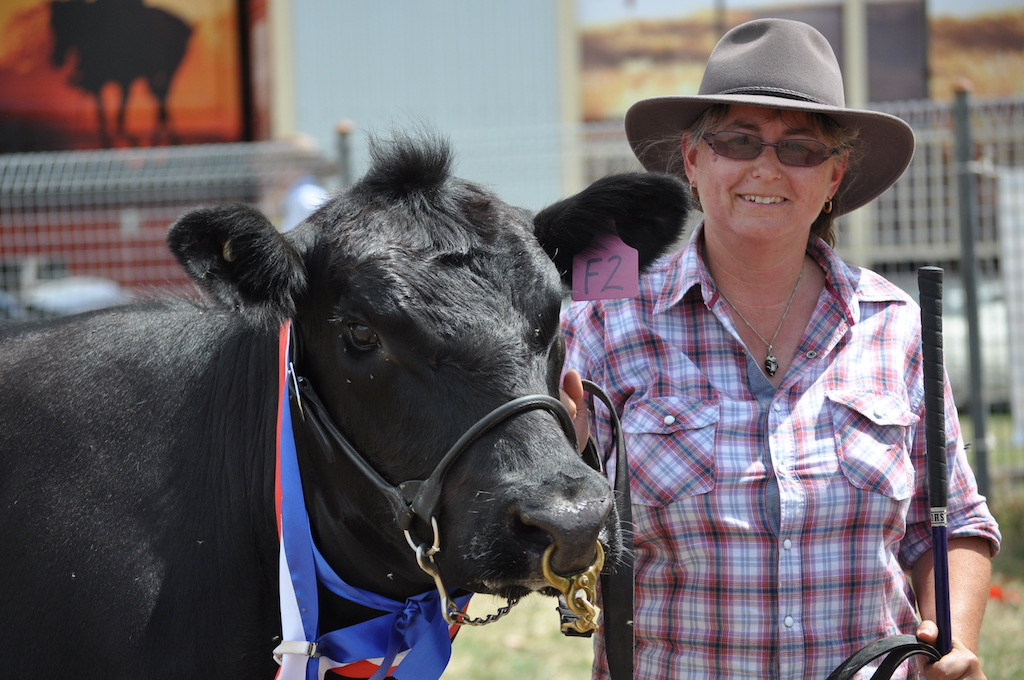 DC_Show cattle Cindy Fisher web.JPG