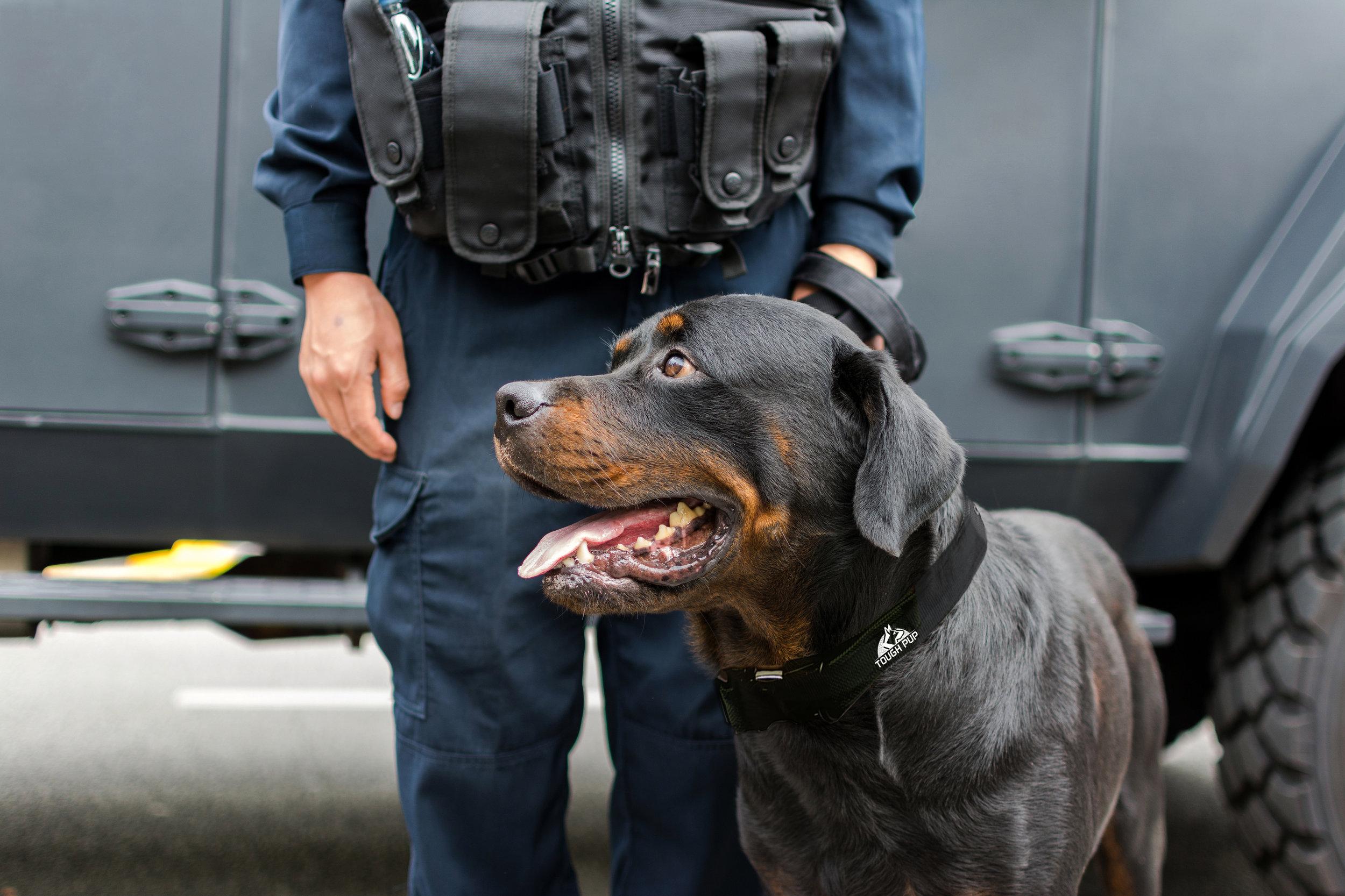 securitydog2.jpg
