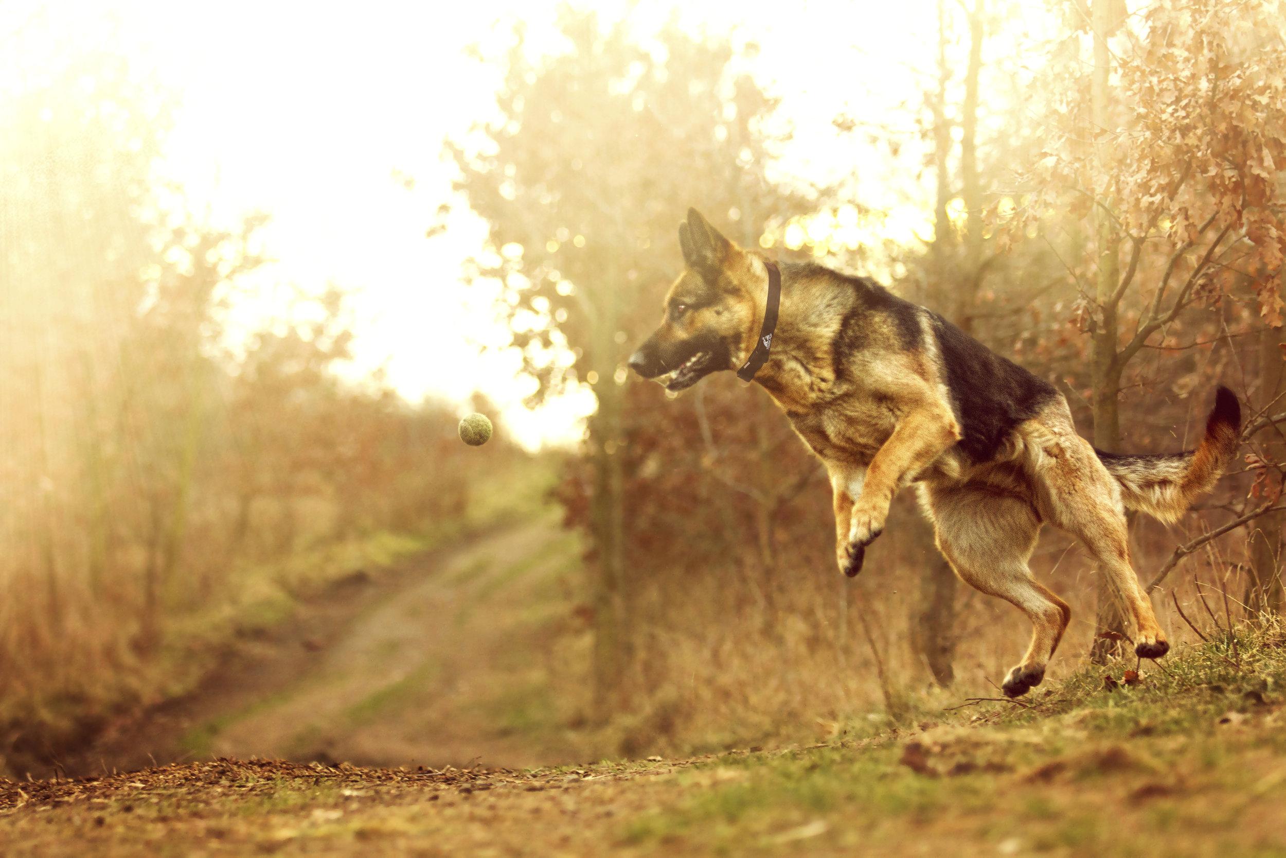 balldog2.jpg