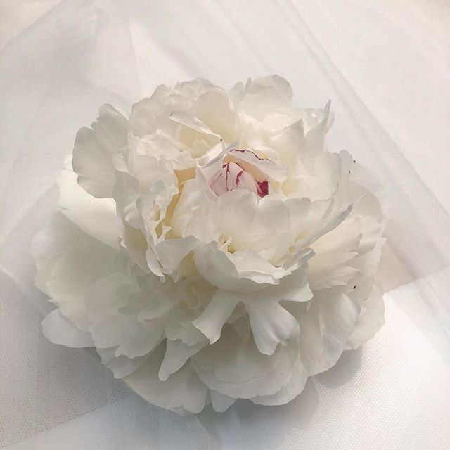Behind the scenes from a recent shoot. This peony was absolute perfection! Visiting the flower markets in spring was also pretty special - the 5am start and 1 hour drive in traffic home was not!! ⠀ ⠀ #peony #bts #livemoremagic