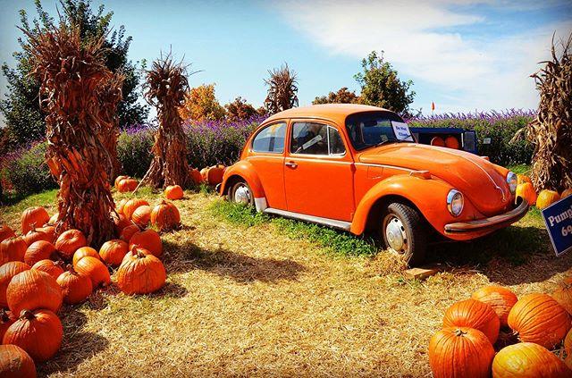 Somewhere in Virginia, I feel like a lifetime ago ... where does time fly? Happy Monday! 🎃 • • #pumpkinpatch #pumpkin #pumpkin🎃 #pumpkins