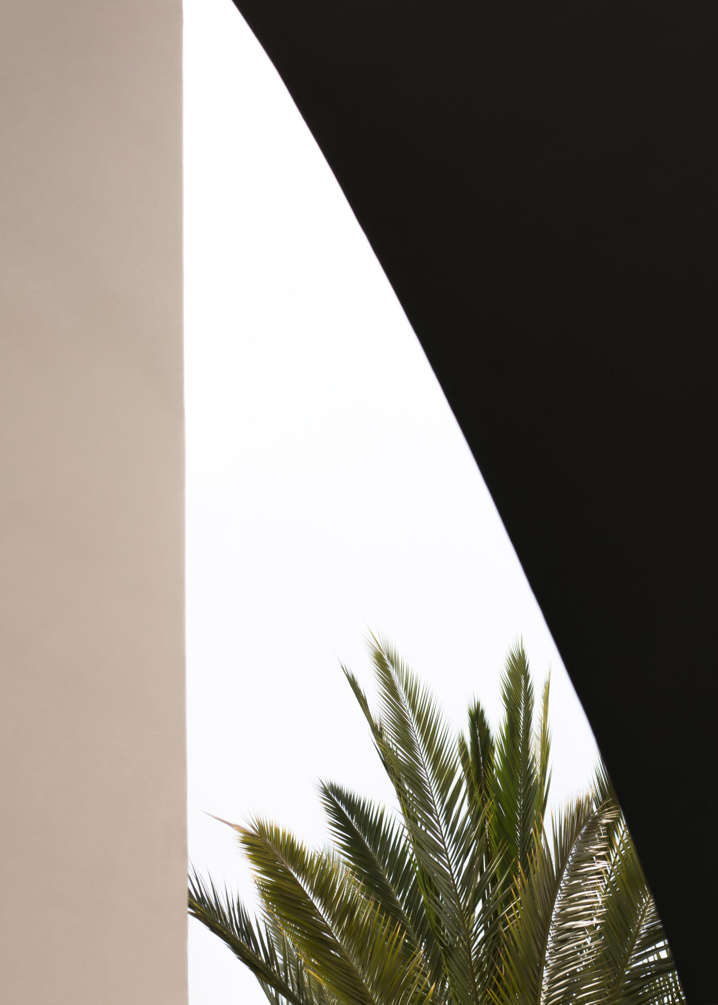 François Aubret | Palm 04