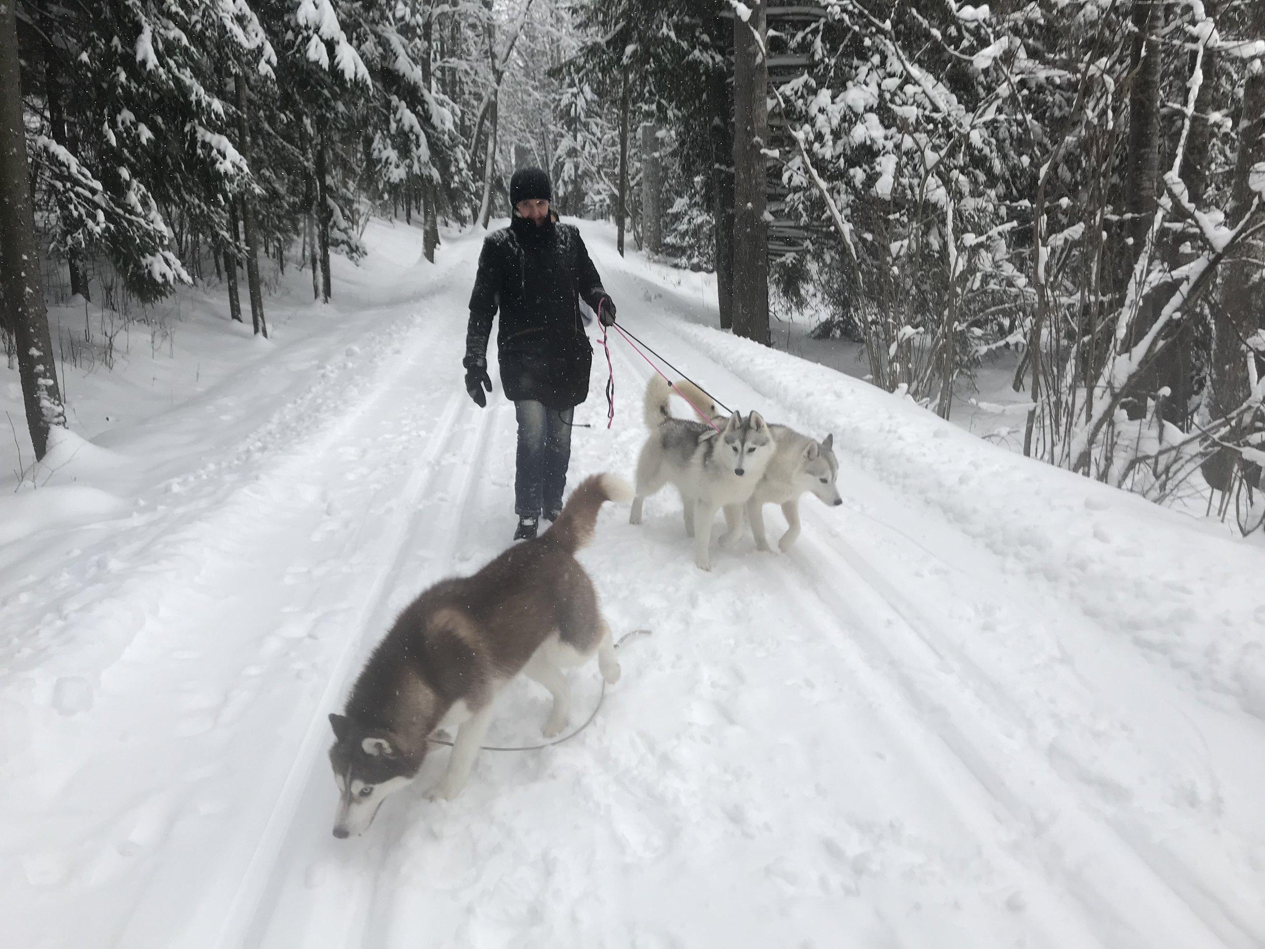 Katja with three of her huskies during the day of the photo shoot: Snow Angel Artico Encanto, Kuurakuonon Red Hot Chili Pepper On Ice (Antero) ja Mikhmakoen Ariadna (Ariadna)
