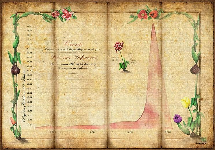 Tulip Mainia
