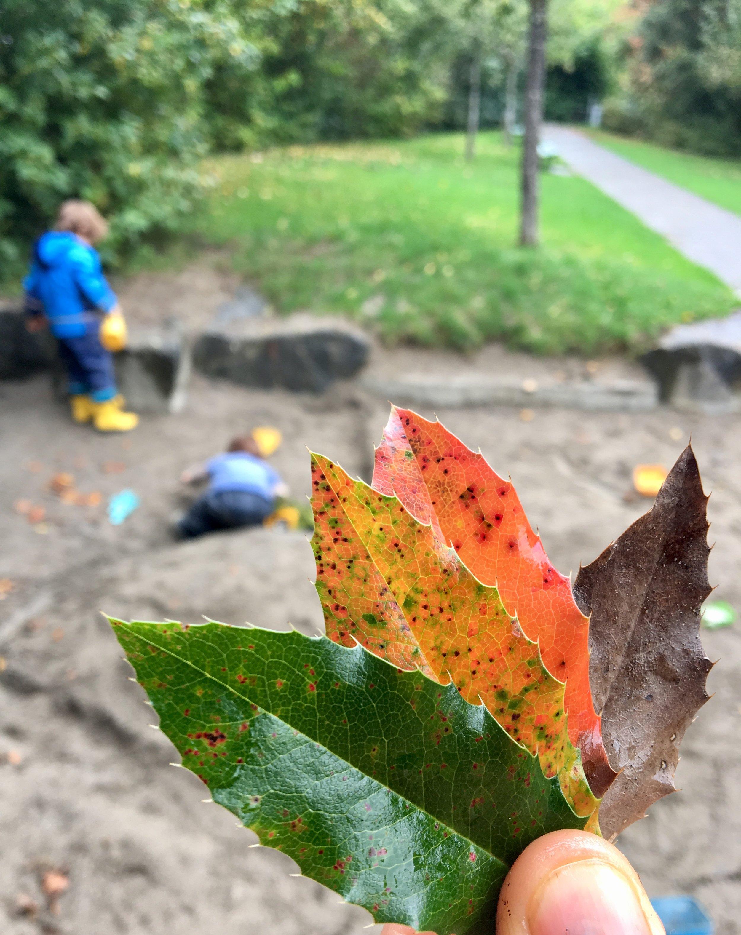 Autumn colours leaves.jpg