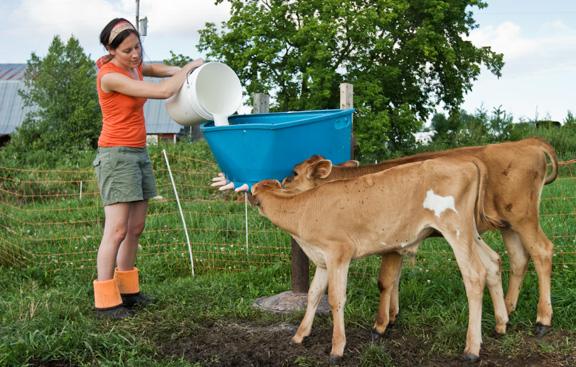 Calves 3-Jenn feeding calves.jpg