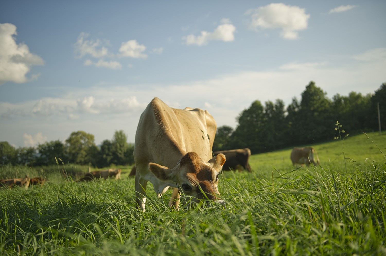 grazing.jpg