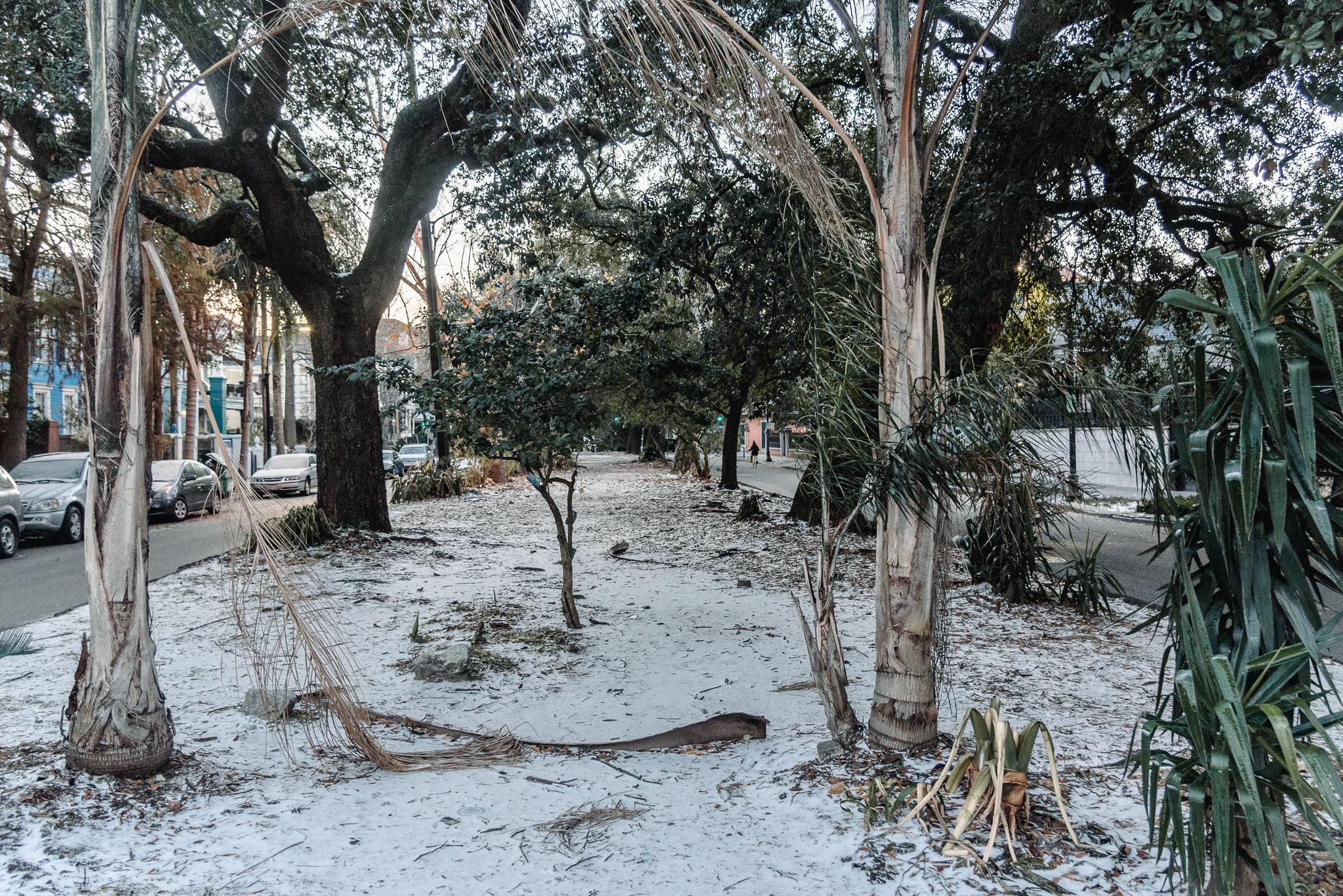 Snow in New Orleans Kallistia Photography-1.jpg