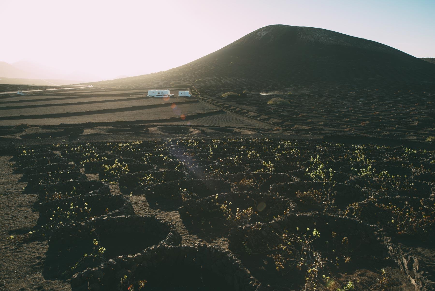 10-Vignobles-Lanzarote.jpg