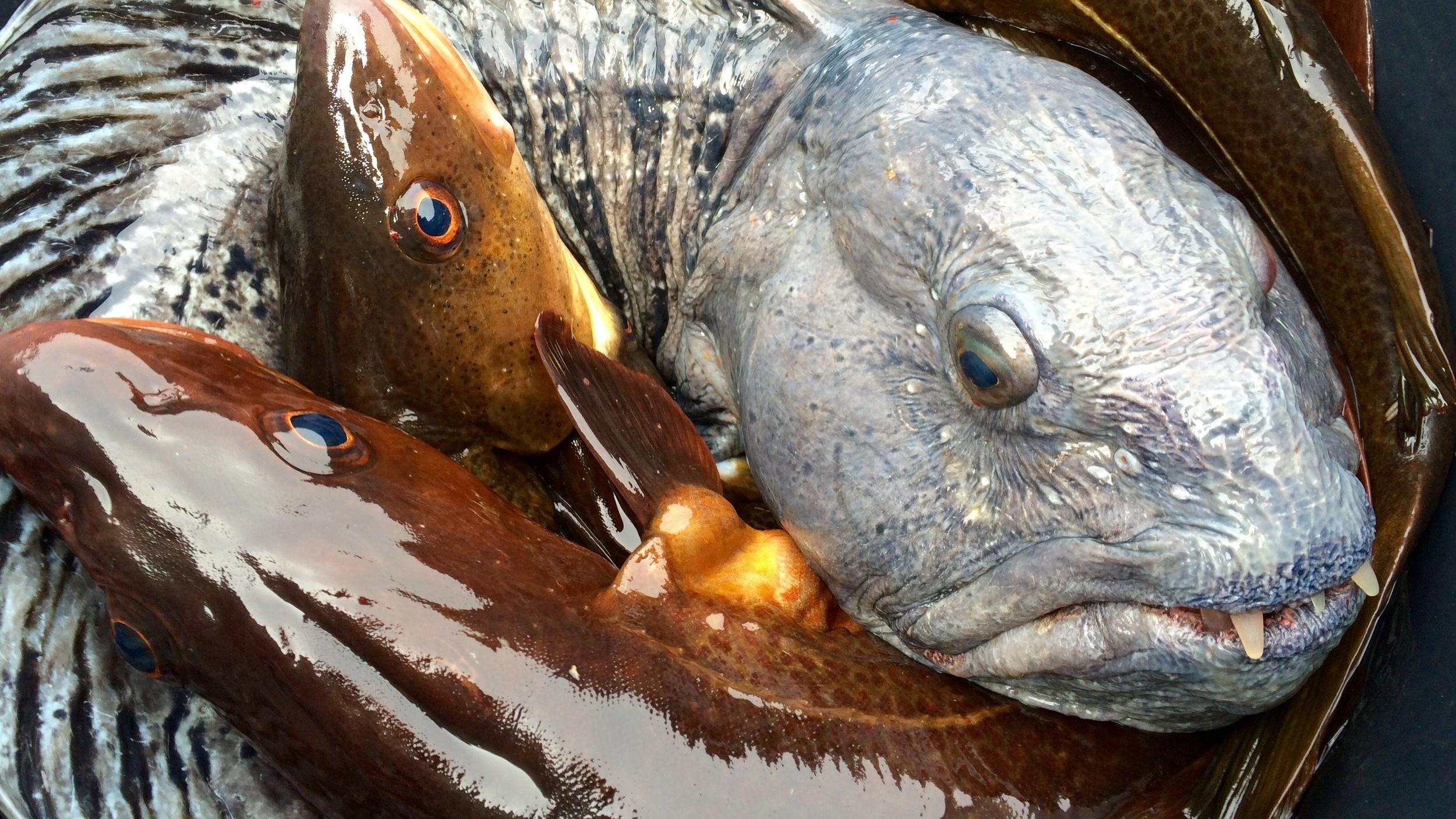 Jakt og fiske -