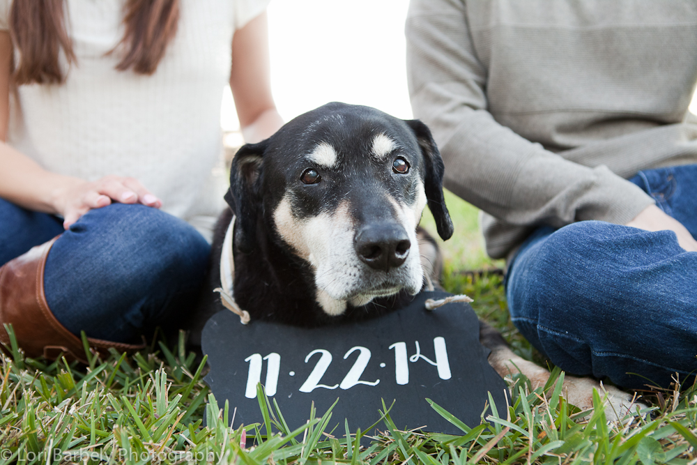 Create Save the Dates - Whether or not you incorporate your wedding date, engagement photos are a great opportunity to create a current image to use for your save the dates and wedding website. Bonus points for incorporating your pets who may or may not be able to attend your ceremony.