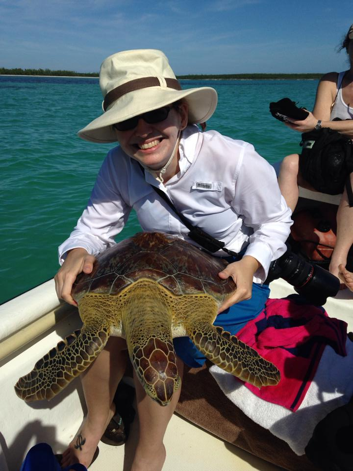 Measuring and tagging turtles in Eleuthera, Bahamas - notice the sea turtle tattoo, which is also my logo, on my foot