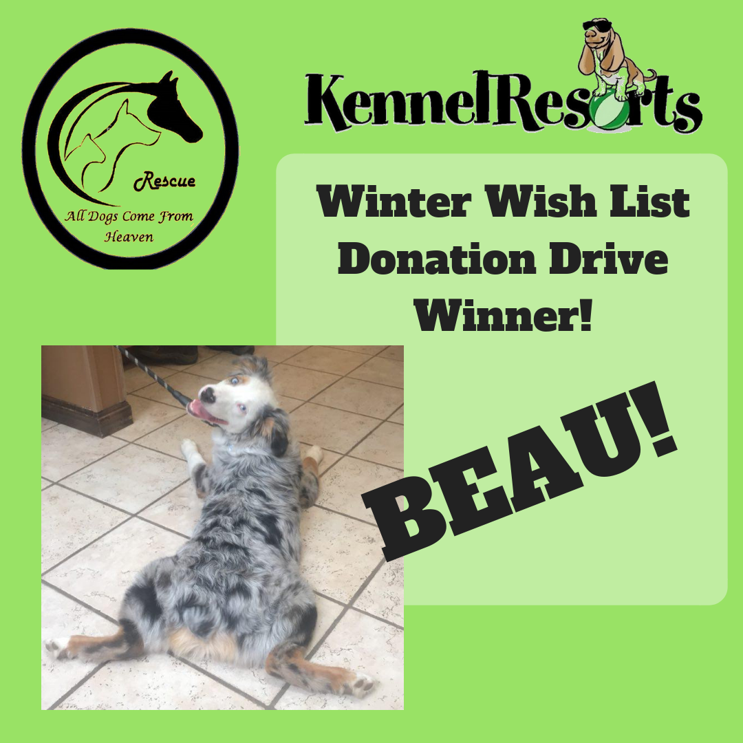 Winter Wish List Donation DriveWinner!.png