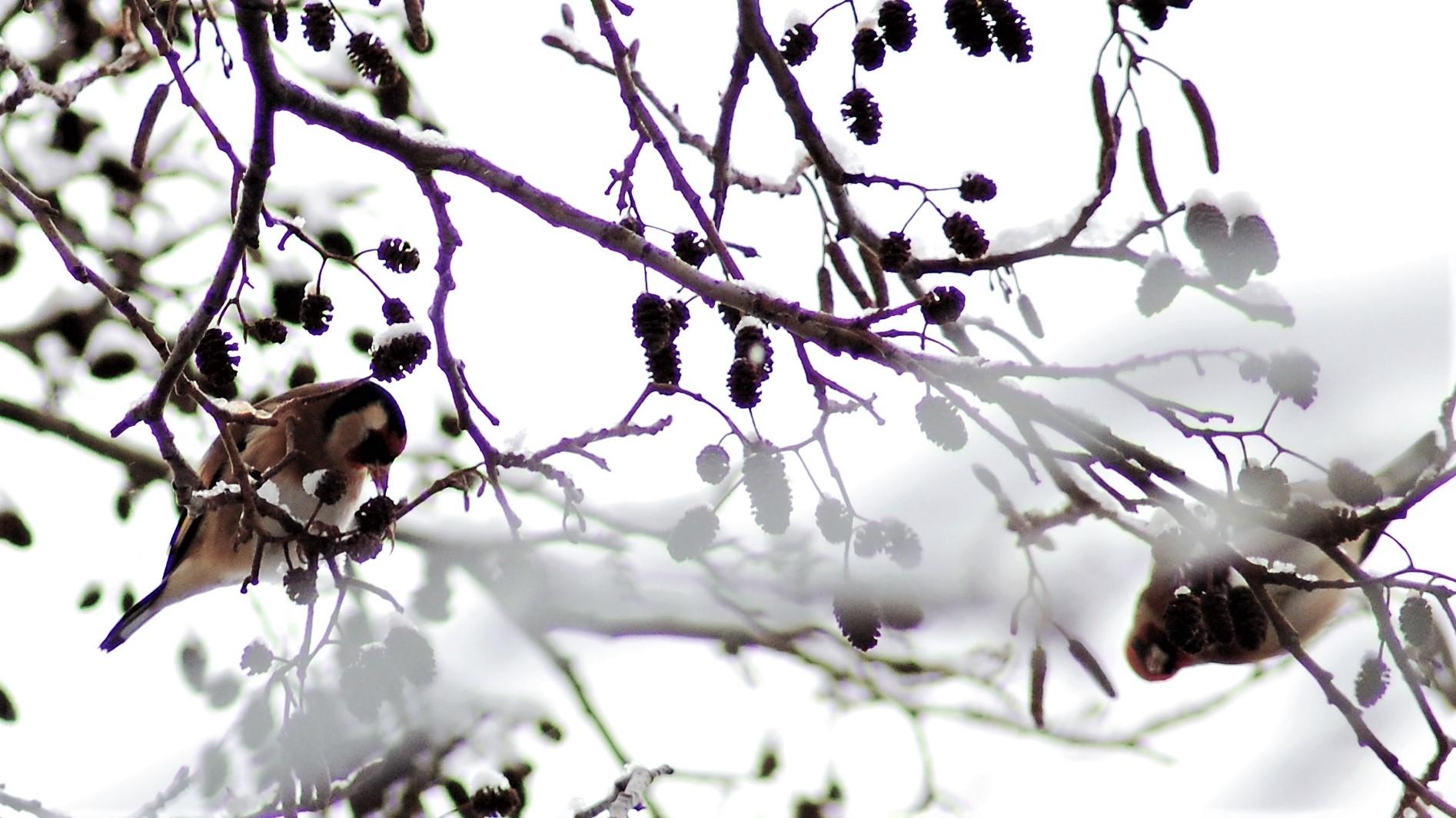 snow jan 2010 204.jpg