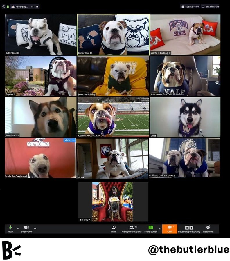 College mascots on Zoom