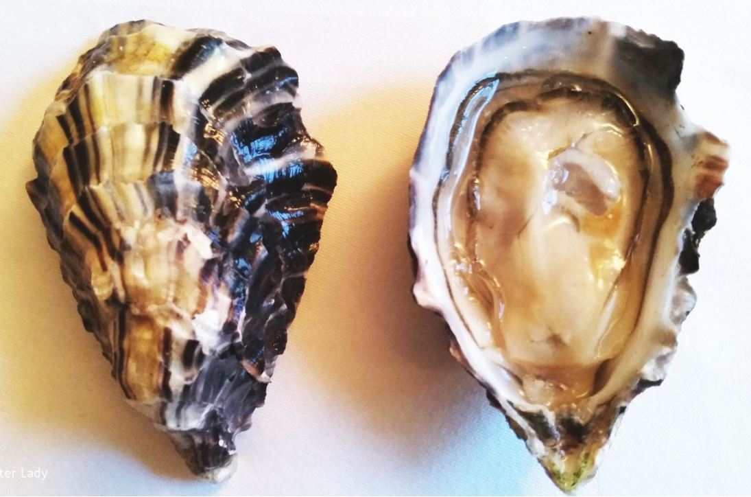 Porthilly Oysters
