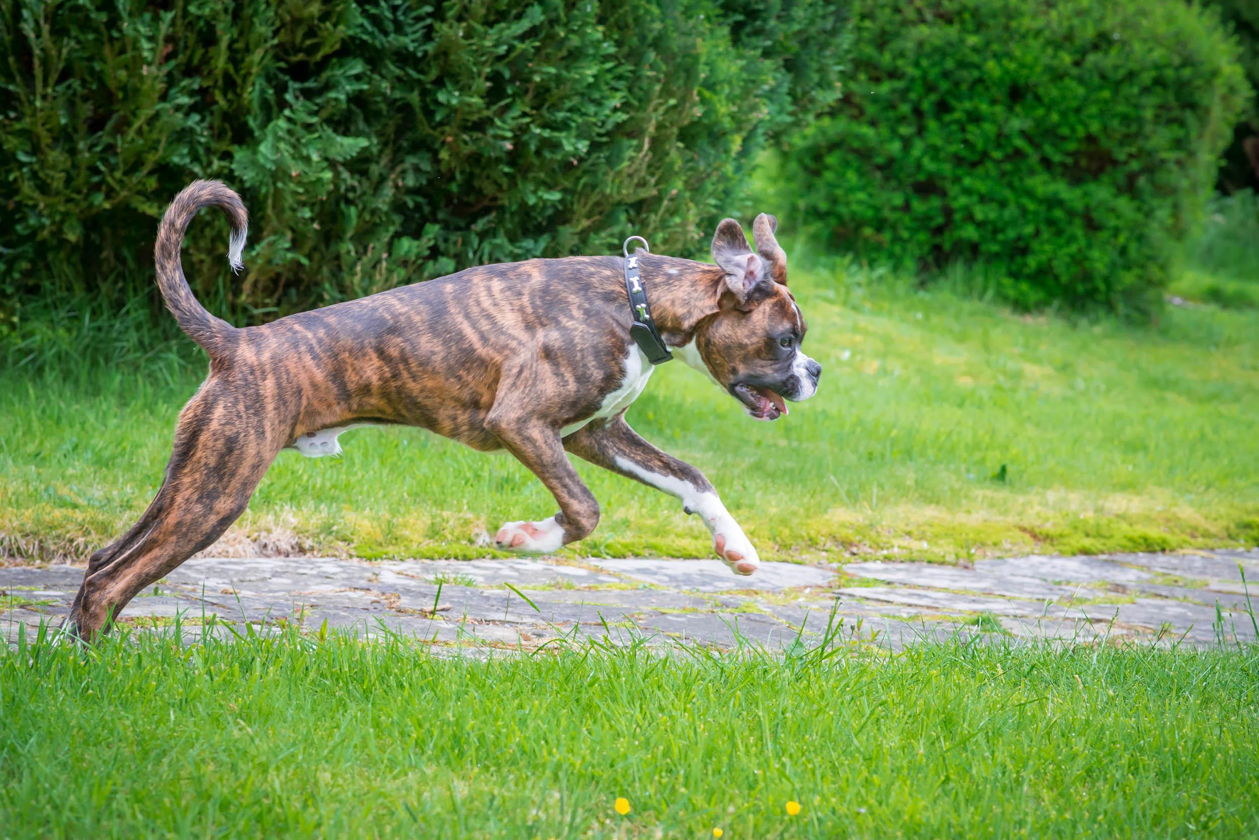 Dogs-4882.jpg