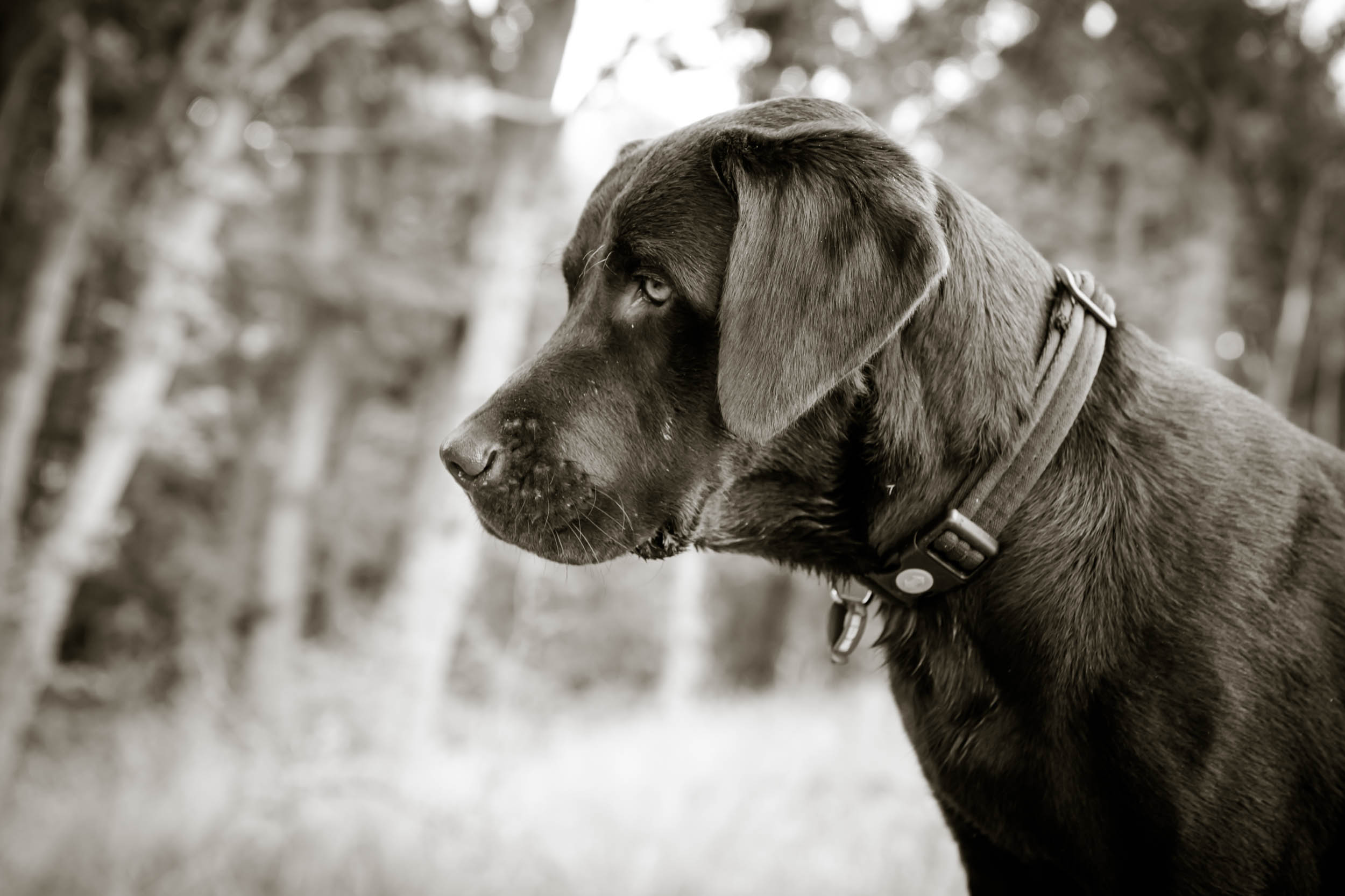 Dogs-0565.jpg