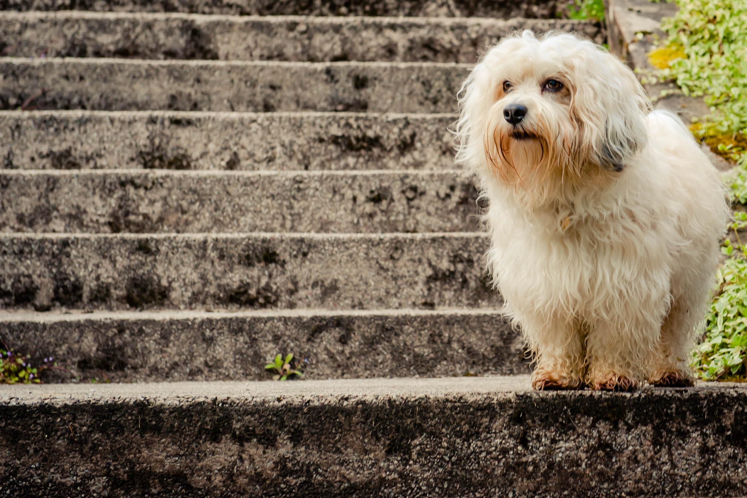 Dogs-8855.jpg