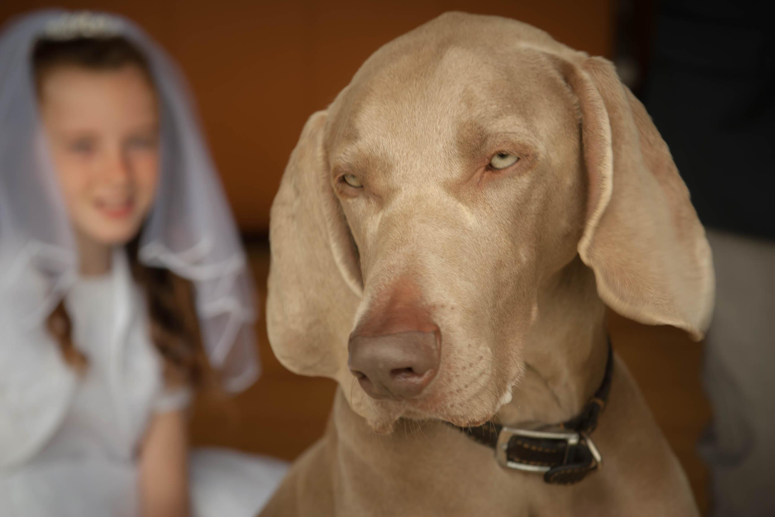Dogs-5499.jpg