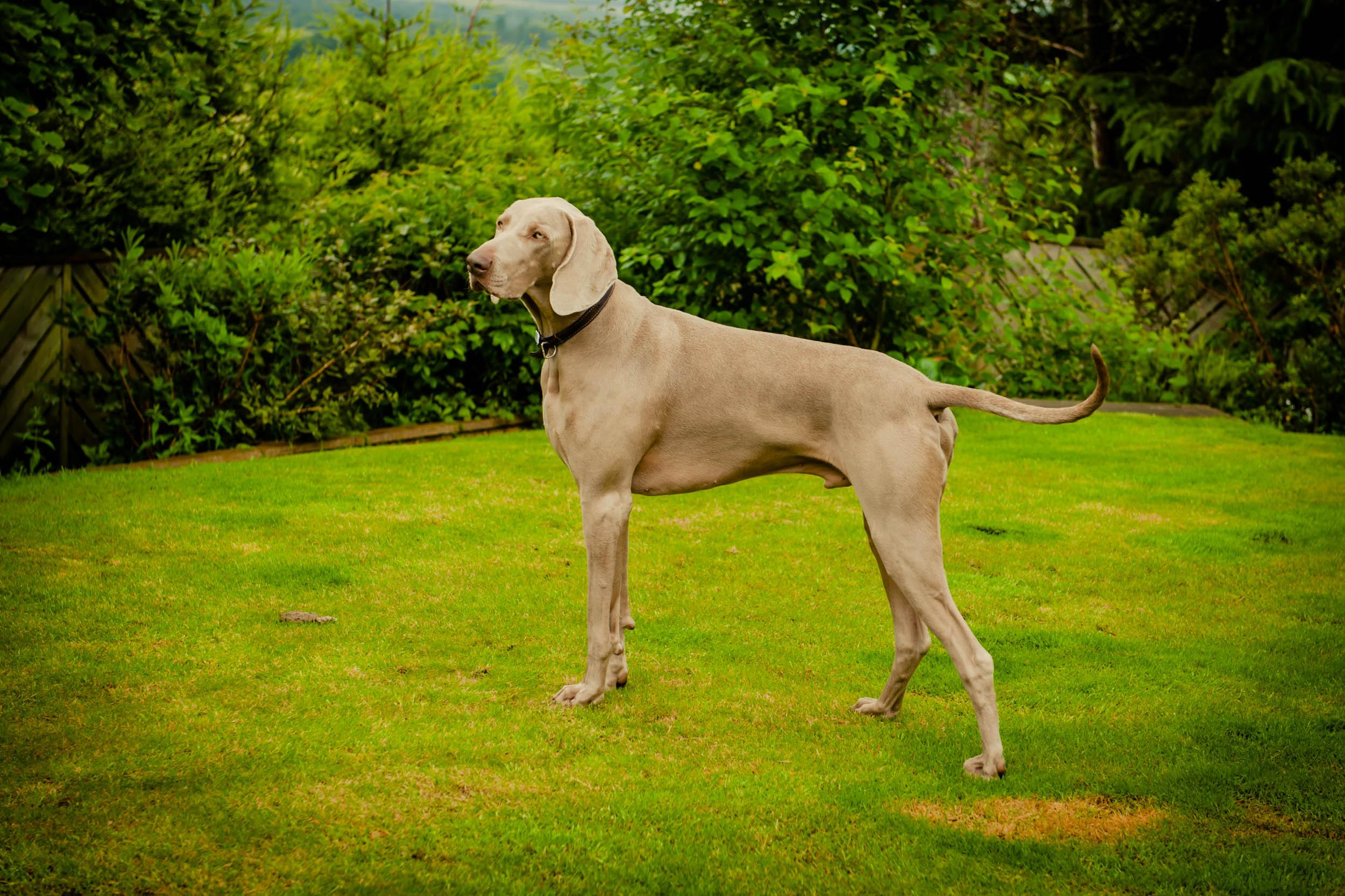 Dogs-5509.jpg