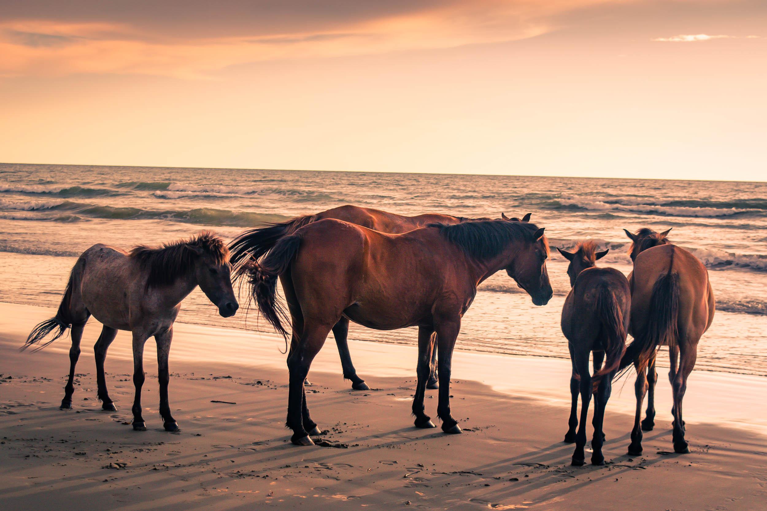 Sabandar-Beach-Sabah-0005.jpg