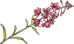pink-floral.png