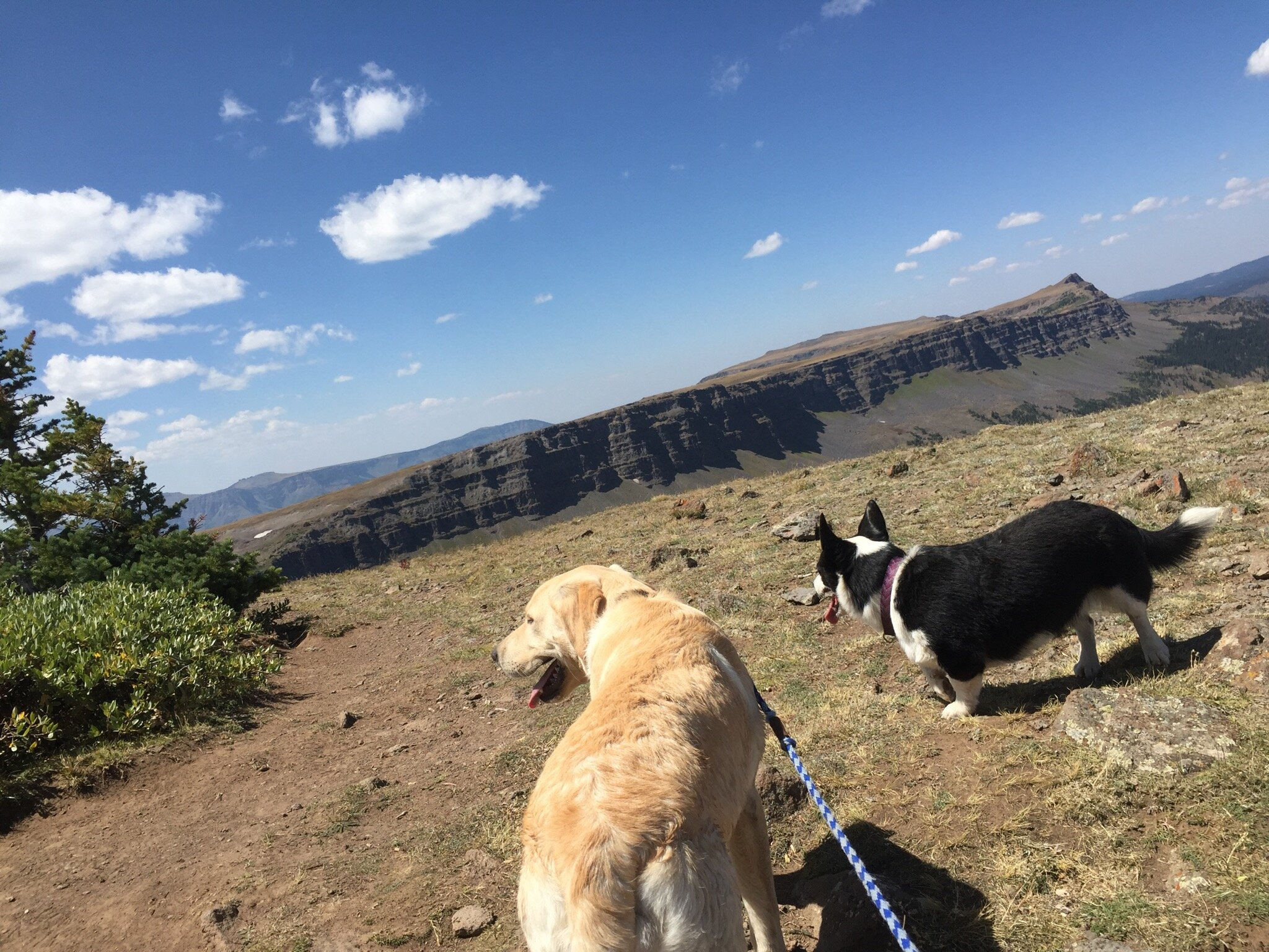 Hiking with Puppies!