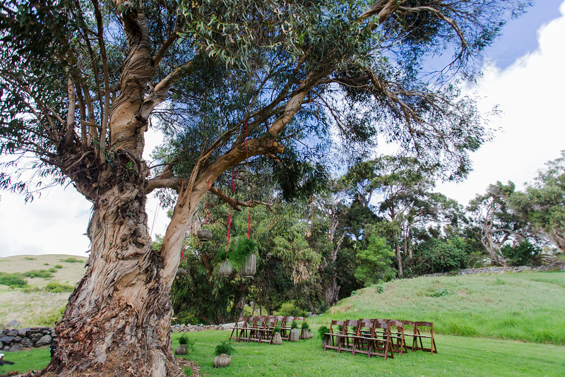 amazing-ceremony-tree.jpg