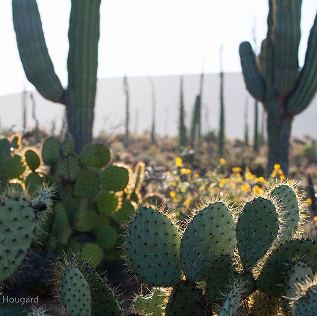 #explorebaja #peaceinthedesert #Baja californiaroadtrip #vwalltrak