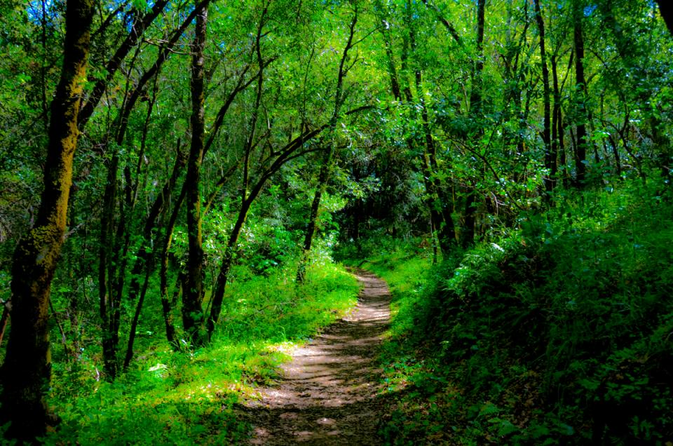 sugarloaf_path.jpg
