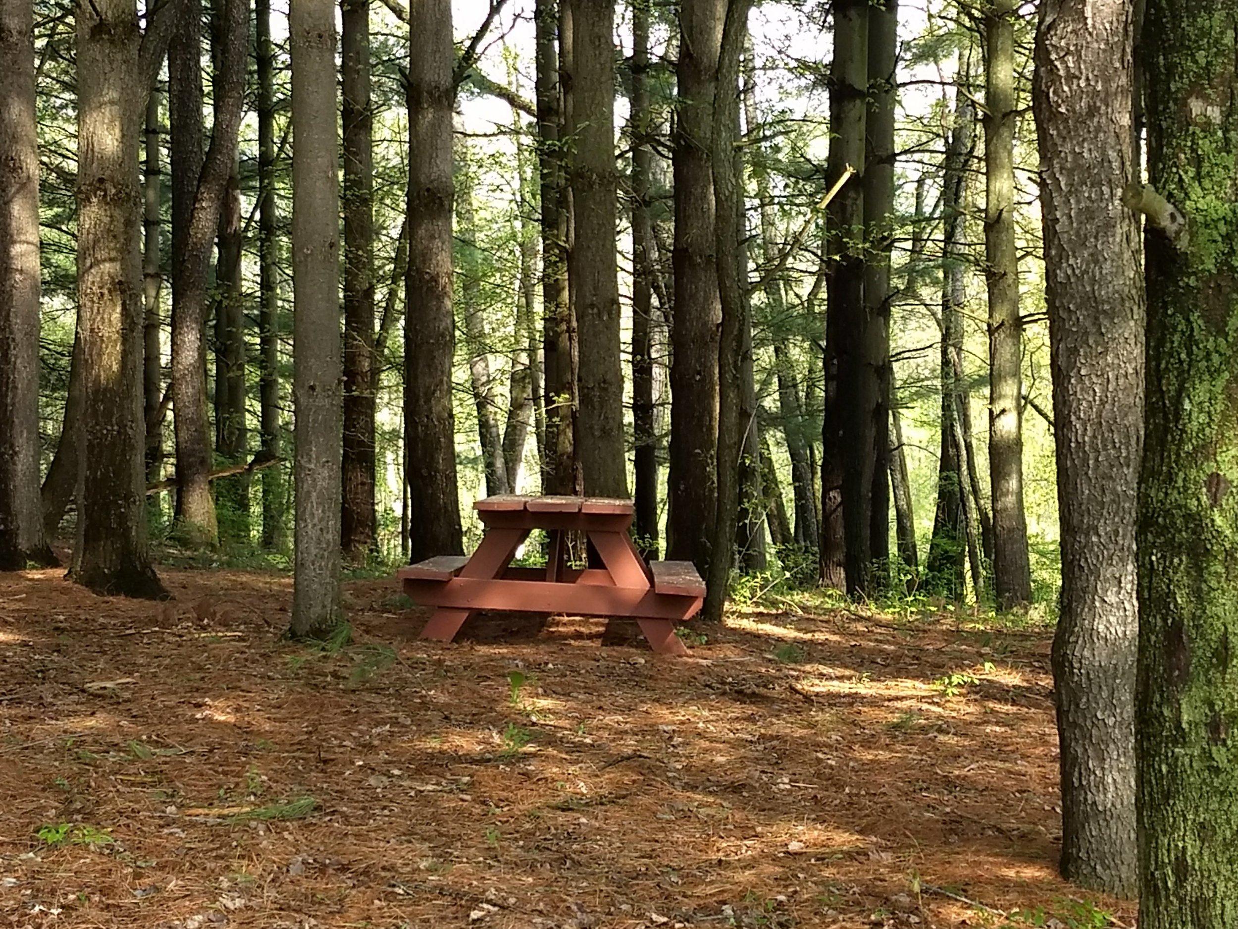 Pine Trees Next to Memorial Lodge