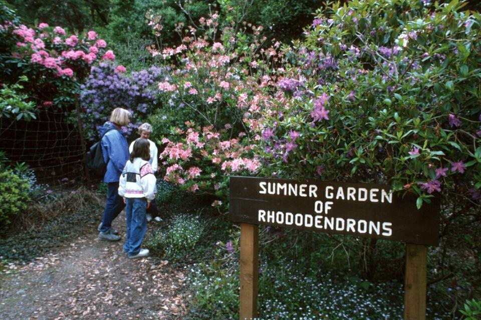 mtn_rhododendron_garden.jpg