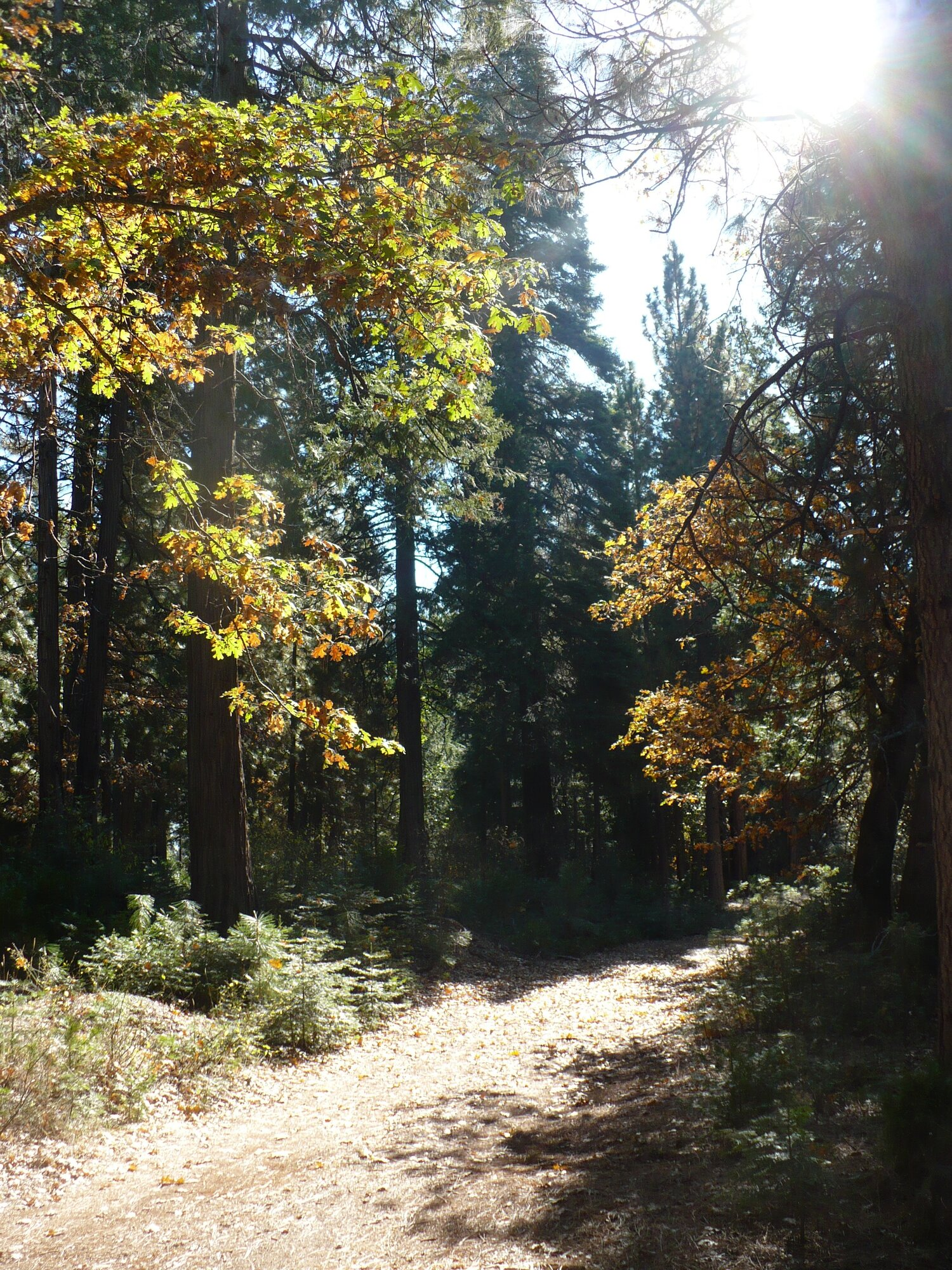 ENJOY TRAILS THROUGH PEACEFUL FOREST