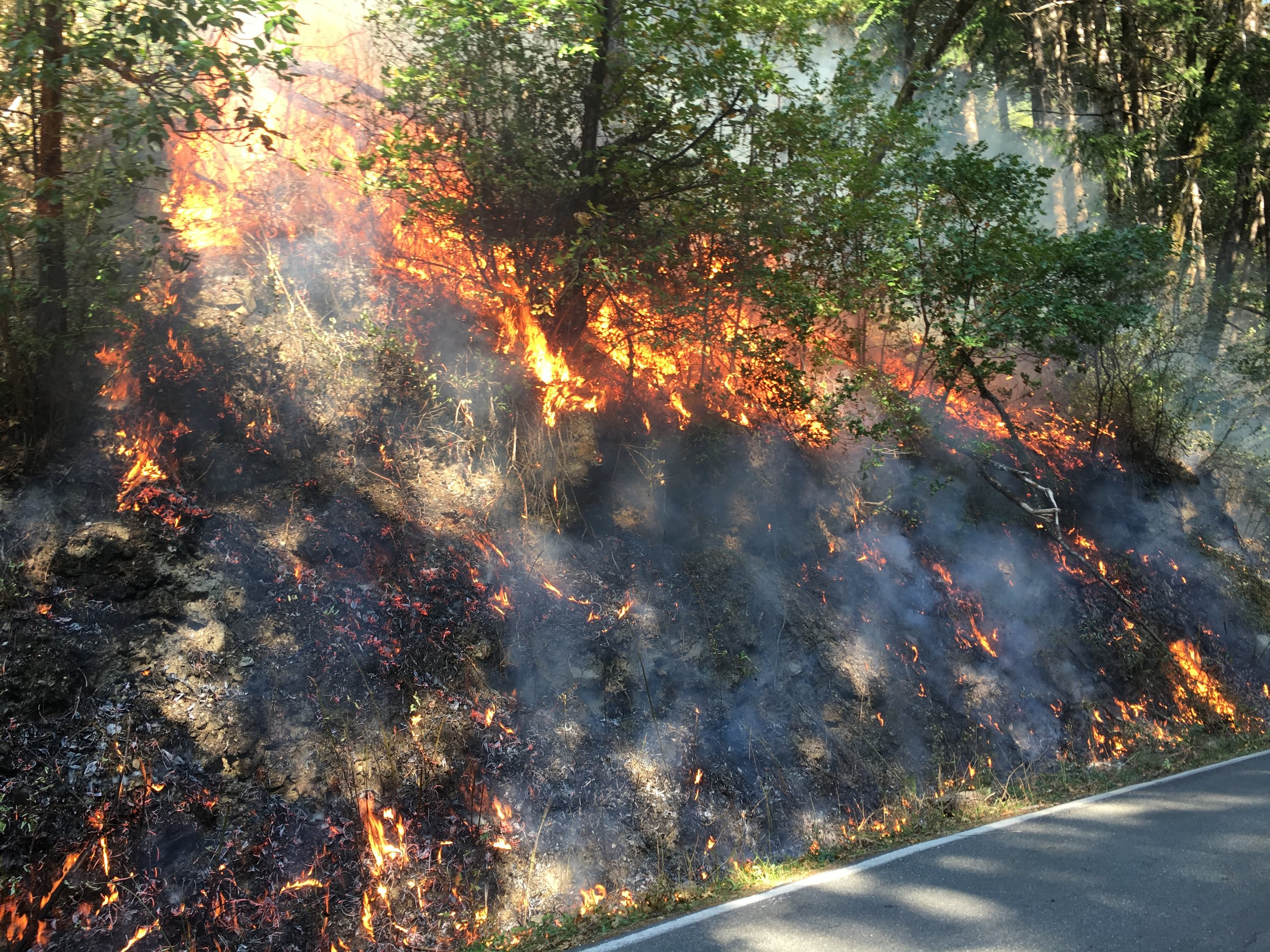 Fall 2017 Cal Fire Fuels Reduction Grant with TREX - Completing the State Response Area Fire Prevention Fund grant project, we combined efforts to treat an 86.5 acre portion of Yurok Ancestral Territory with prescribed fire.The burn reduced fuels across the high-risk area between homes and Highway 169, and helped stimulate growth of cultural resources while training local and visiting fire workers.See the full News Release HERE