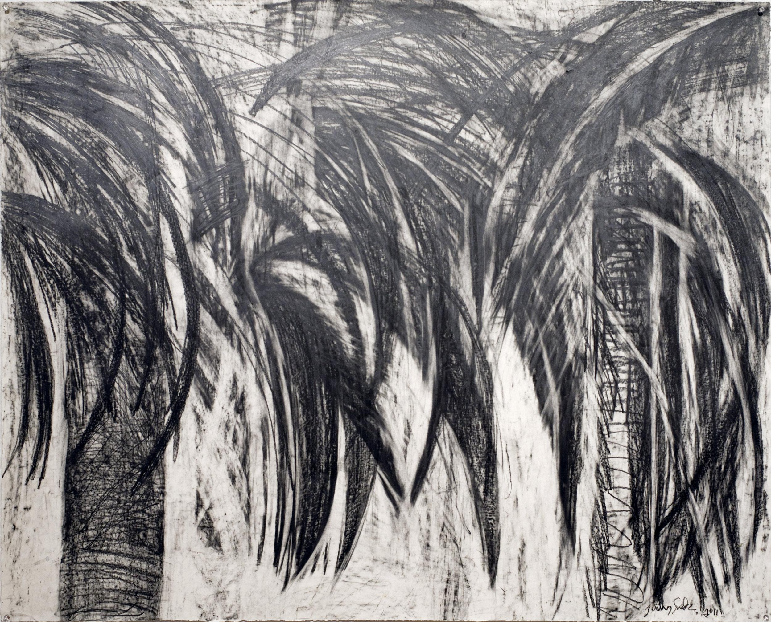 Jenny Snider,  Dark Palms,  graphite on paper, 36h x 44.5w in.