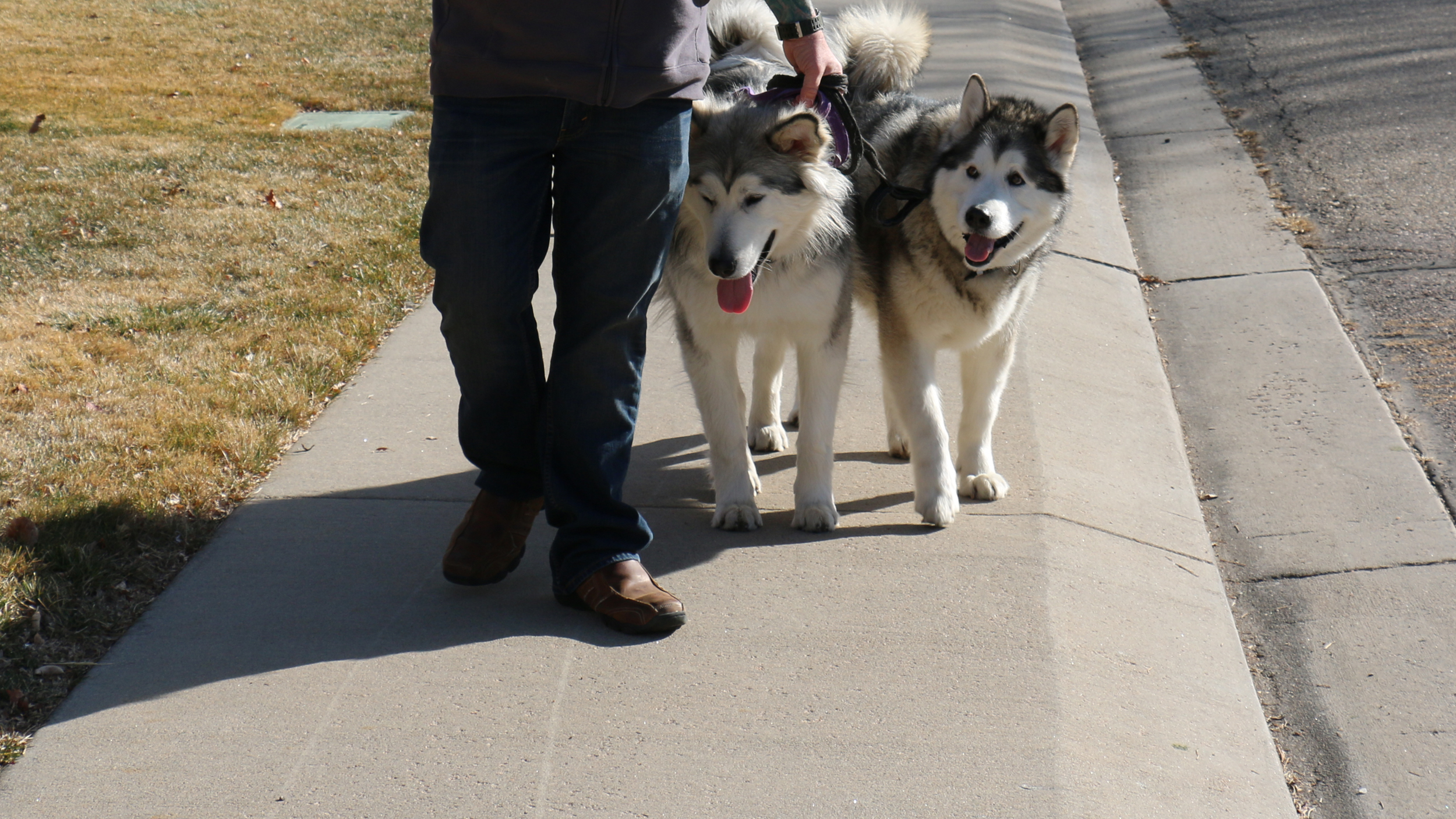 FREE PACK WALKS - Love to Walk Your Dog Again