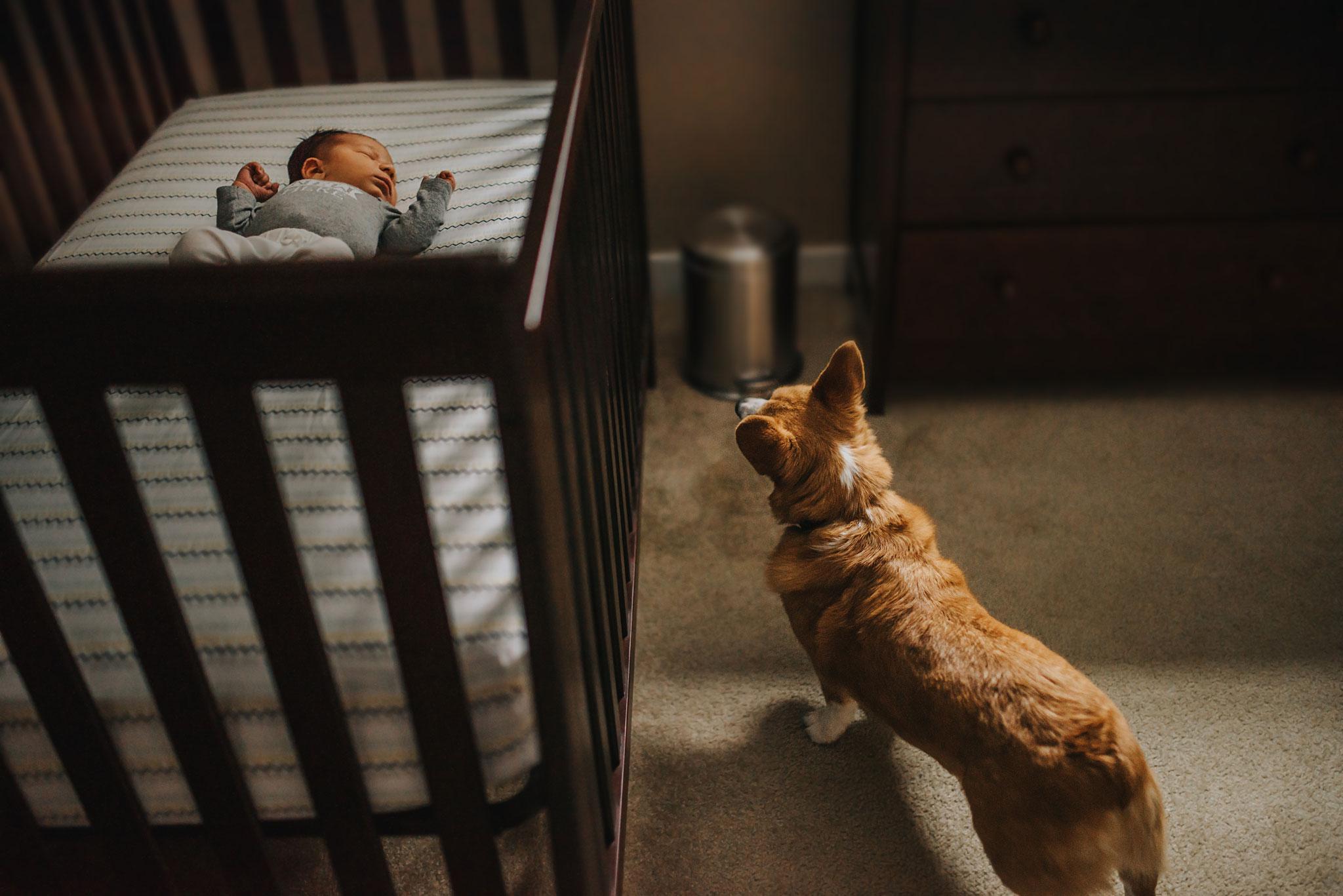 golden aura photography - the newborns experience
