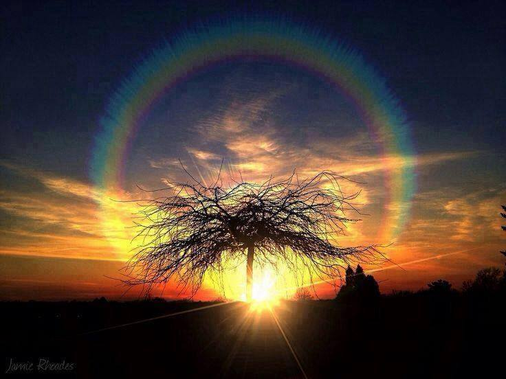 Rainbows Lipo.jpg