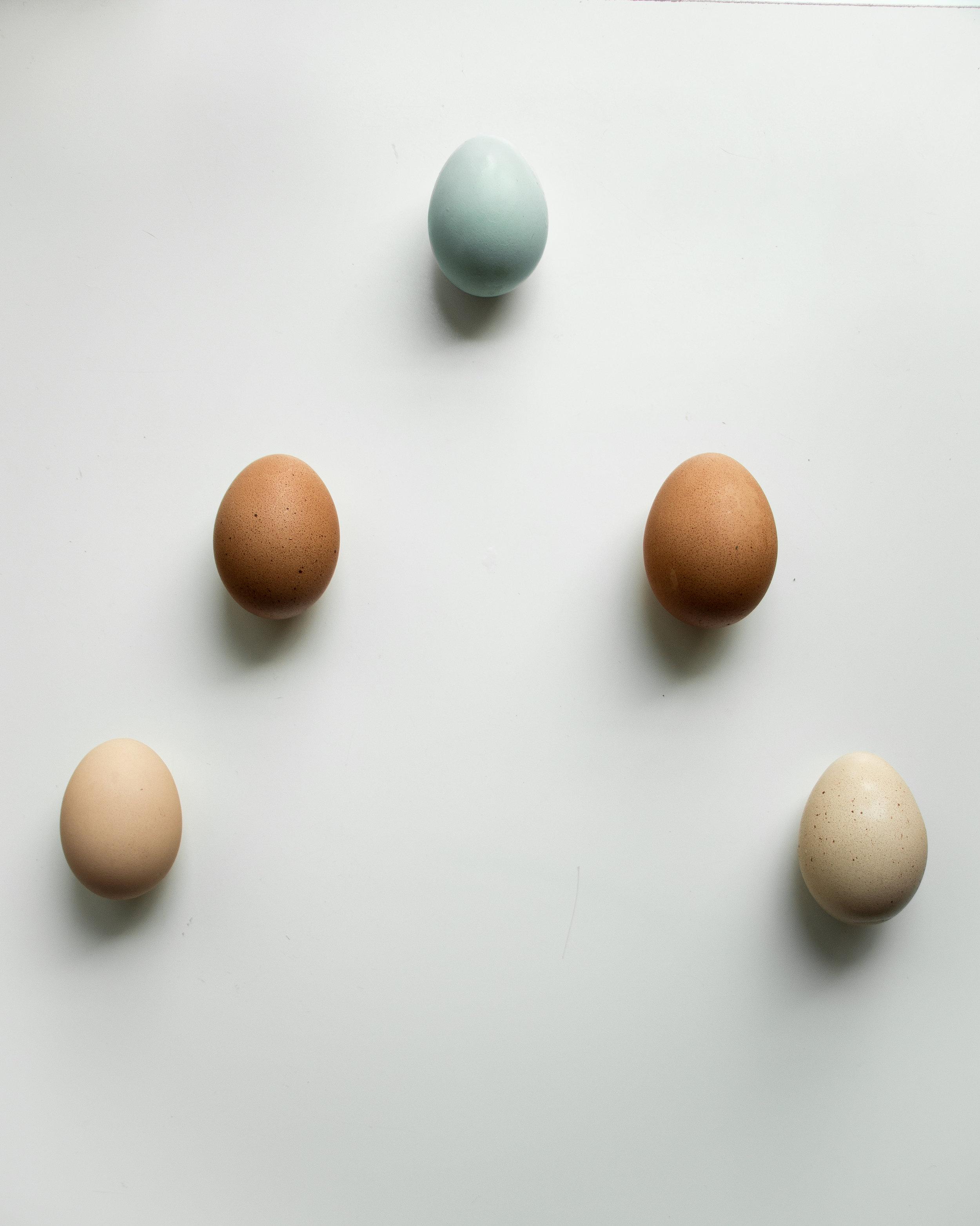 Composite Egg_2.jpg
